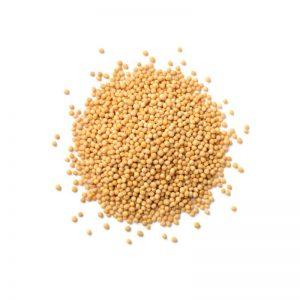 graines de moutarde biologique